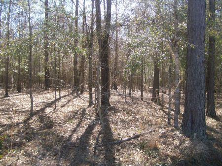 100 +/- Acres Of Beautiful Land : Zion Chapel : Coffee County : Alabama