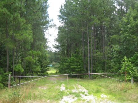 245 Ac Lakefront Timberland : Emporia : Greensville County : Virginia
