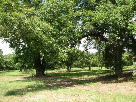 34+/- Acres Of Land : Statesboro : Bulloch County : Georgia