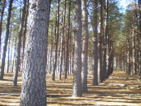 25 To 50 Acres Of Land : Metter : Candler County : Georgia