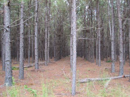 130+/- Acres Of Land : Metter : Candler County : Georgia