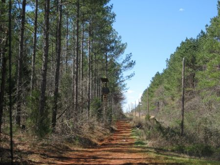 Power Line Tract : Abbeville : Abbeville County : South Carolina