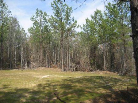 125 Acres Large Homesite : Jeffersonvillie : Twiggs County : Georgia