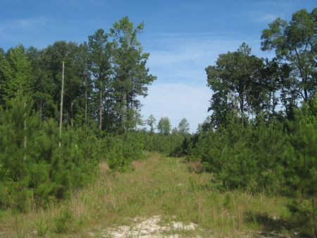 70 Acres Investment Tract : Skippers : Greensville County : Virginia