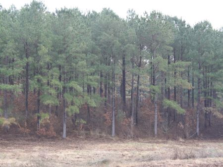 284 Acres Heart Of Deer Country : Pattison : Claiborne County : Mississippi
