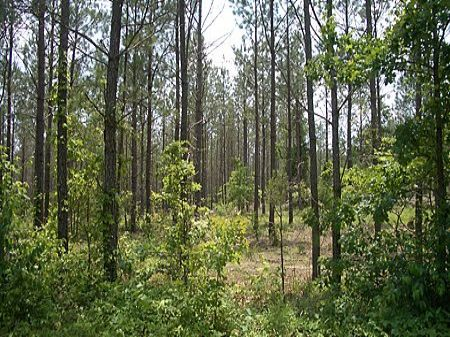 19 Acres Tom Jones Road : Kingston : Bartow County : Georgia