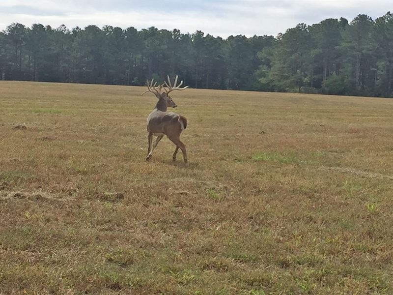 Fission Creek Deer Farm : Opp : Covington County : Alabama
