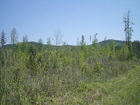 42 Acres Close To Fairmount : Fairmount : Gordon County : Georgia