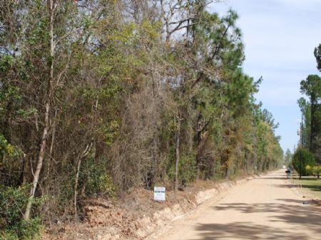 74.84 Acres, Very Nice Wooded Tract : Jesup : Wayne County : Georgia