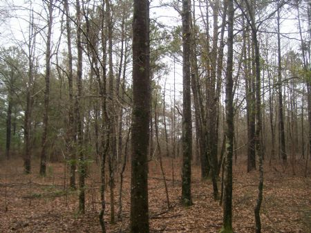 Great Land For Hunting Or Farming : Greenville : Butler County : Alabama