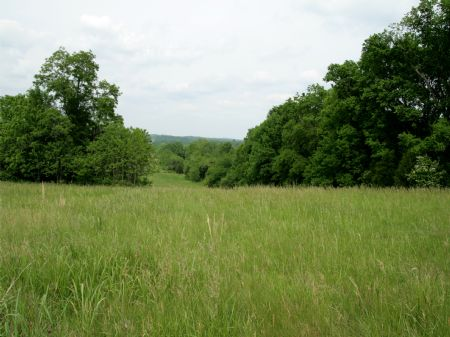 89 Ac  Bordering Wildlife Mgmt Area : Columbia : Maury County : Tennessee