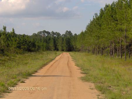 10 Ac Only 3.5 Miles To Wal-mart : Baxley : Appling County : Georgia