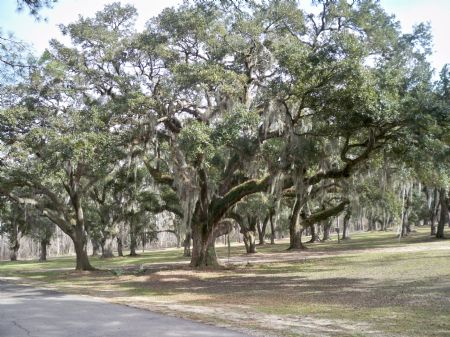 Whiskey Island Preserve 500+/-acres : Ponchatoula : Tangipahoa Parish : Louisiana
