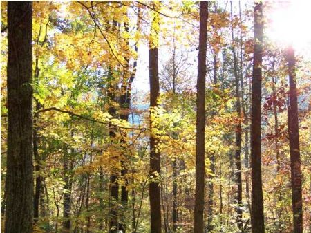 5 Acres - Bank Owned Nice Views : South Pittsburg : Marion County : Tennessee