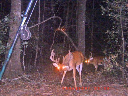 776 Acre Turnkey Hunters Paradise : Weston : Webster County : Georgia
