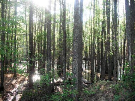 221 Acres  Farm : Wrightsville : Johnson County : Georgia