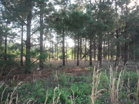 Nice 57 Acre Farm Or Large Homesite : Wrightsville : Johnson County : Georgia