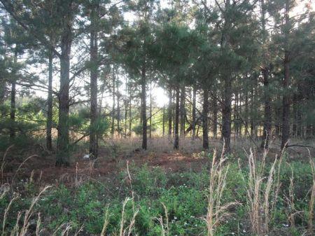 Nice 57 Acre Farm Or Large Homesite : Wrightsville : Johnson County : Georgia
