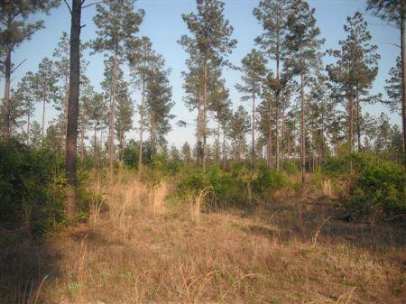67.55 Acres Farm : Wrightsville : Johnson County : Georgia