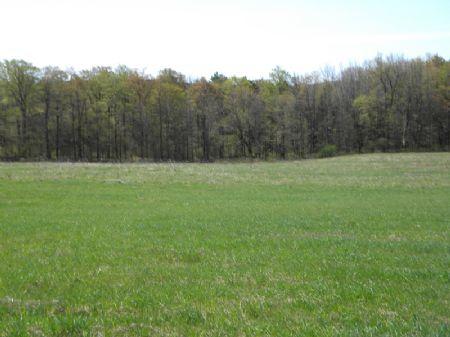 5+ Acres Bordering State Forest : Smyrna : Chenango County : New York