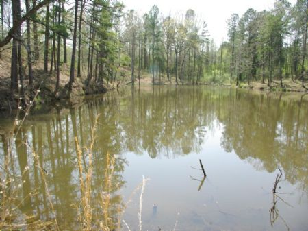 Two Lakes & 8 Acres- Two Home Sites : Moody : Saint Clair County : Alabama