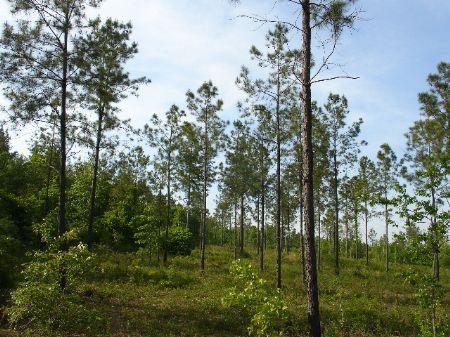 20 Acres : Wetumpka : Elmore County : Alabama