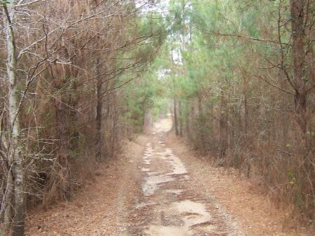 Crossroads - 27 Acres : Pelahatchie : Rankin County : Mississippi