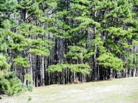 Ac175- Great Pasture & Woods : Roanoke : Randolph County : Alabama