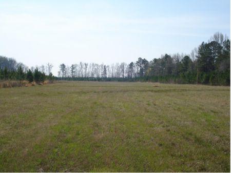 Blue Wing Plantation : Bennettsville : Marlboro County : South Carolina
