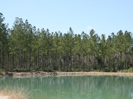 17.44 Acres With Pond Only $65,900 : Baxley : Appling County : Georgia