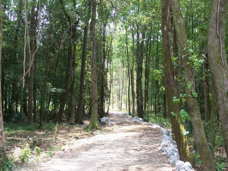 Brunson - 25 Ac. W/nice House Site : Brunson : Hampton County : South Carolina