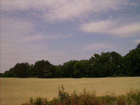 Great Home site or Mini Farm : Vienna : Dooly County : Georgia