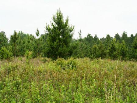 Singletary South Farm : Ochlocknee : Thomas County : Georgia