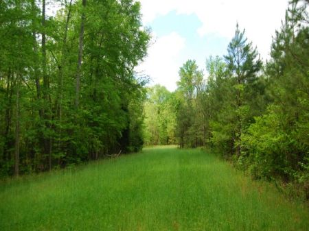 93 Acres Wooded Recreational Tract : Union : Union County : South Carolina