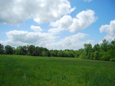 91 Acre Farm W/ Pasture : Union : Union County : South Carolina