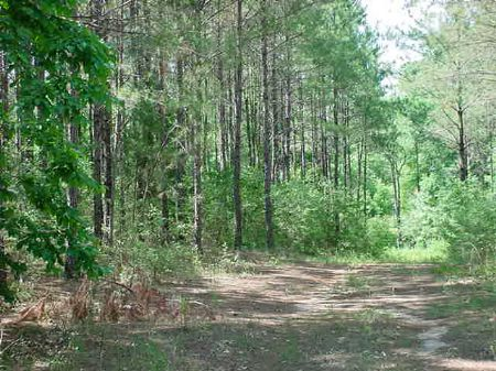 420+/- Acres Will Divide : Curtis : Coffee County : Alabama