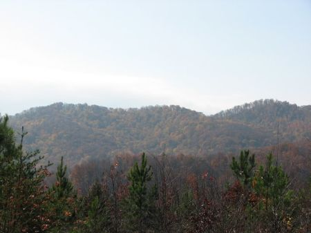 Hunting Property : Sunbright : Morgan County : Tennessee
