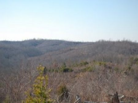 Cumberland Plateau Hunting Property : Sunbright : Morgan County : Tennessee
