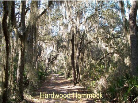 Lochloosa Tract : Lochloosa : Alachua County : Florida