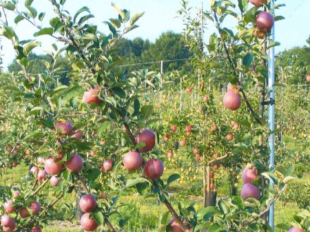 Turn-key Profitable Apple Orchard : Watkins Glen : Schuyler County : New York