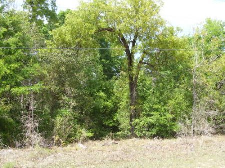 5 Acres In Melrose Landing (a-330) : Hawthrone : Putnam County : Florida
