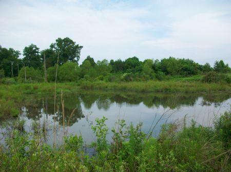 30 Acres With Pond : Hawkinsville : Pulaski County : Georgia