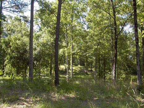 25+/- Estate Tracts : Newborn : Morgan County : Georgia