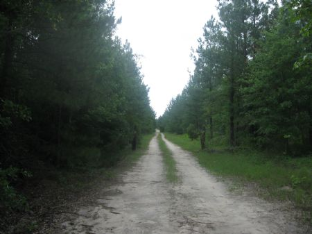 George Perkins Tract : Waynesboro : Burke County : Georgia