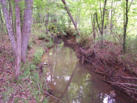 Deer, Turkey, Hogs, Ducks, Oh My : Crawfordville : Taliaferro County : Georgia