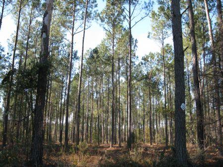 Bid Sale - Poco B : Varnville : Hampton County : South Carolina