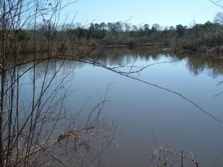 138 Acres Of Land For Sale : Pine Level : Montgomery County : Alabama