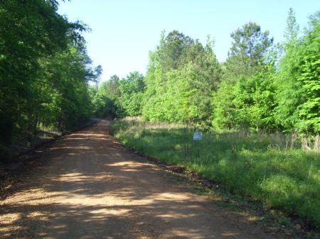 Pester Tract : Sw Of Roanoke : Chambers County : Alabama