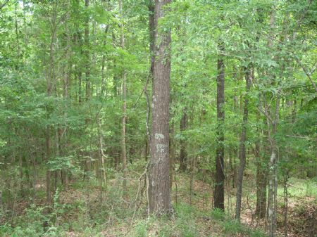 90 Acres Creek And Pond : Goodman : Holmes County : Mississippi