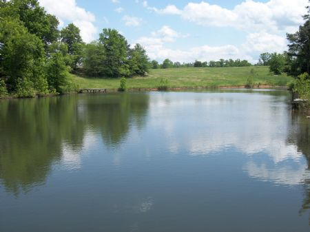 Pasture, Hardwoods And Creek : Greensboro : Greene County : Georgia